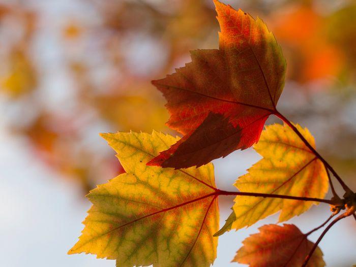 三ツ池公園の紅葉について