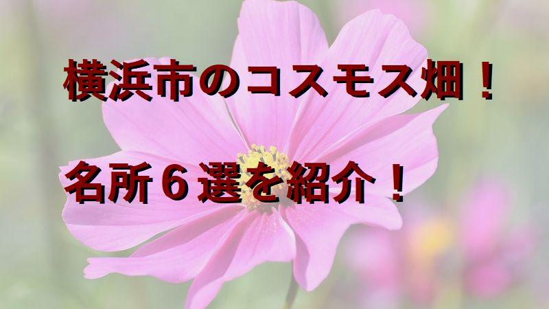 横浜市のコスモス畑!名所6選